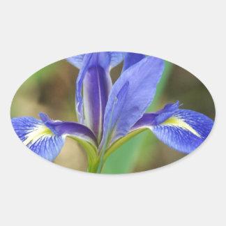 Florida Iris Oval Sticker
