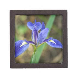 Florida Iris Premium Jewelry Box