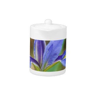 Florida Iris