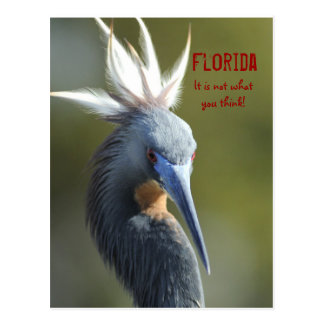 Florida .... it is not what you think postcard