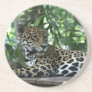 Florida Jaguar looking back lying down Beverage Coasters