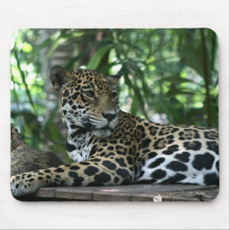 Florida Jaguar looking back lying down Mouse Pad