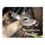 Florida Key Deer Postcard