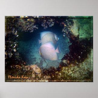 Florida Keys FishPoster Poster