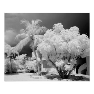 Florida Keys house and its palm trees, USA. 2 Poster
