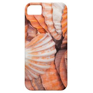 Florida Keys, Key West, seashells iPhone SE/5/5s Case