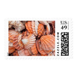 Florida Keys, Key West, seashells Postage Stamp