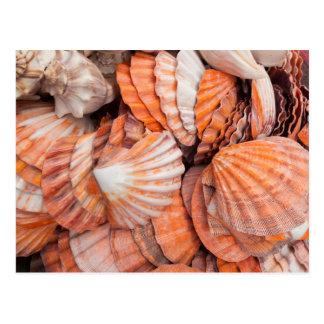 Florida Keys, Key West, seashells Postcard