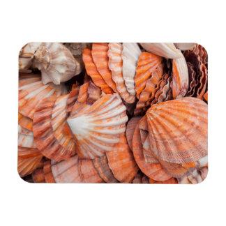 Florida Keys, Key West, seashells Magnet