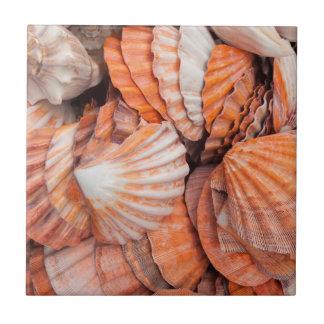 Florida Keys, Key West, seashells Tile
