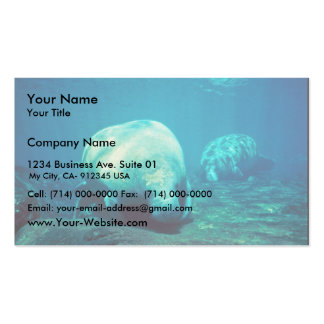 Florida Manatee Business Cards