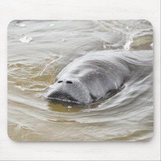 Florida Manatee Ormond Beach Magnet Mouse Pad