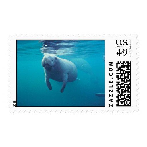 Florida Manatee Postage Stamps