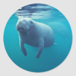Florida Manatee Round Sticker