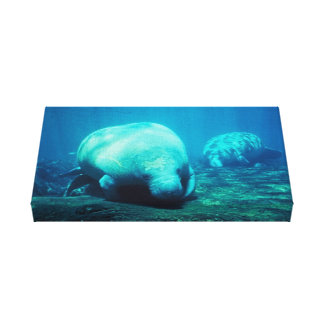 Florida Manatee Wrapped Canvas Poster Canvas Print