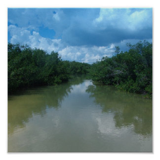 Florida Mangroves Poster