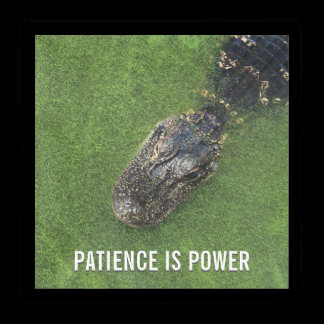 Florida Nature • Alligator • Patience is Power Acrylic Tray