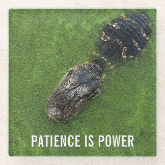 Florida Nature • Alligator • Patience is Power Glass Coaster