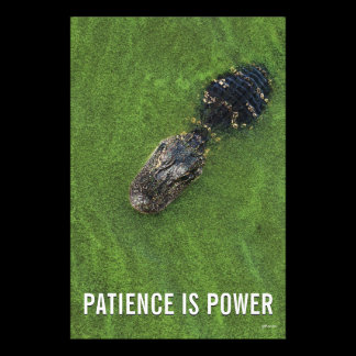 Florida Nature • Alligator • Patience is Power Photo Print