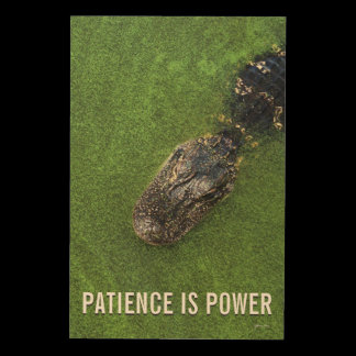 Florida Nature • Alligator • Patience is Power Wood Print