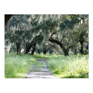 Florida Oak Postcard