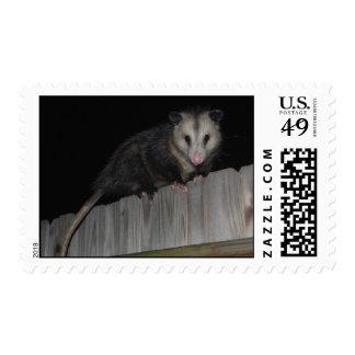 Florida Opossum Postage Stamp