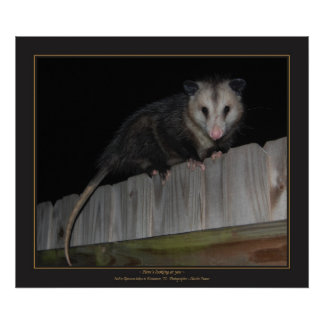 Florida Opossum Poster