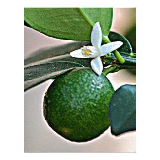 Florida Orange Blossom and small Orange Custom Letterhead