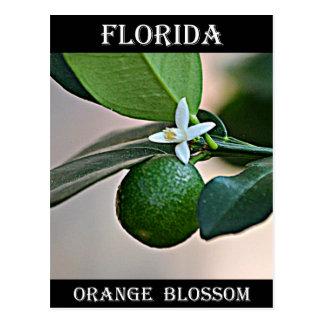 Florida Orange Blossom and small Orange Postcard