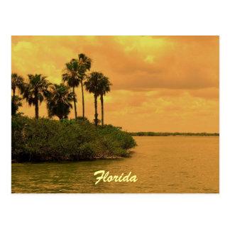 Florida Palm Tree Reverie Post Cards