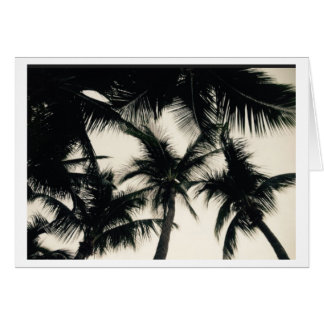 Florida Palm Trees Photo Greeting Card