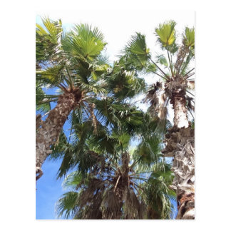 Florida Palms Postcard