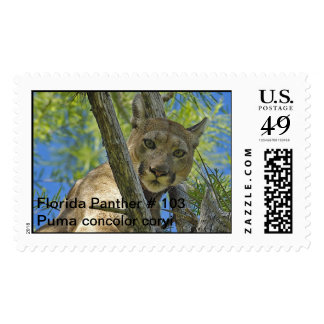 Florida Panther 103 Postage Stamps