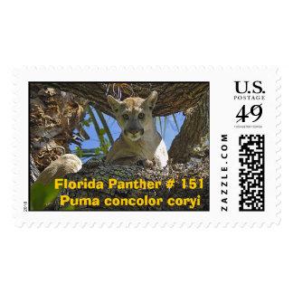 Florida Panther 151 Postage Stamps