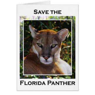 Florida Panther Card