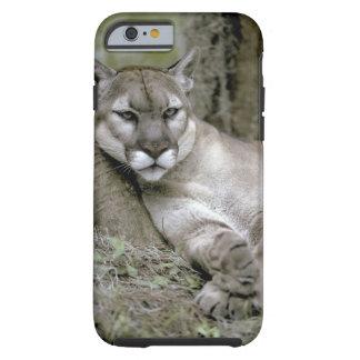 Florida panther, Felis concolor coryi, Tough iPhone 6 Case