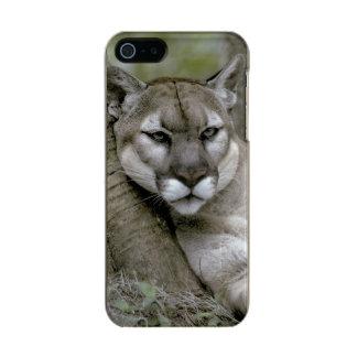 Florida panther, Felis concolor coryi, Incipio Feather® Shine iPhone 5 Case