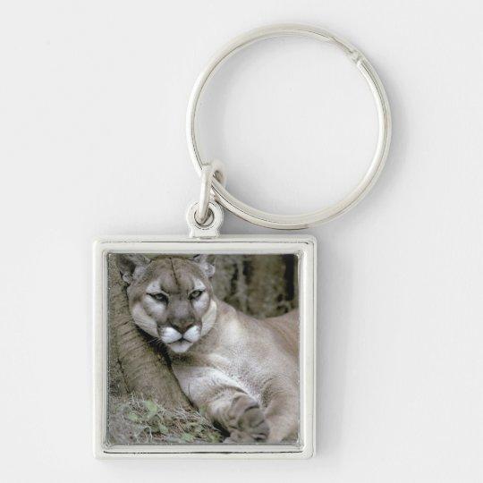 Florida panther, Felis concolor coryi, Keychain