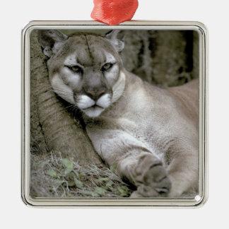 Florida panther, Felis concolor coryi, Metal Ornament