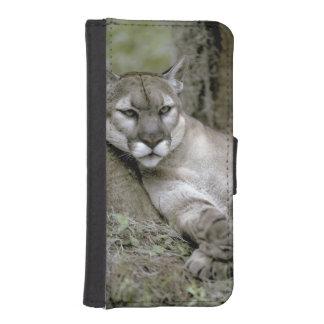 Florida panther, Felis concolor coryi, iPhone 5 Wallet