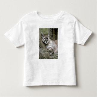 Florida panther, Felis concolor coryi, T-shirt