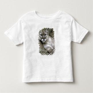 Florida panther, Felis concolor coryi, Toddler T-shirt