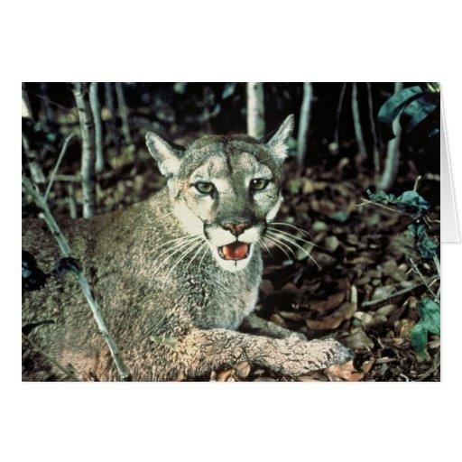 Florida Panther Greeting Card