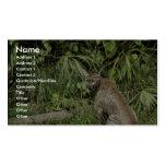 Florida Panther National Wildlife Refuge Business Cards