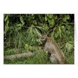 Florida Panther National Wildlife Refuge Card