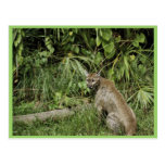 Florida Panther National Wildlife Refuge Postcard