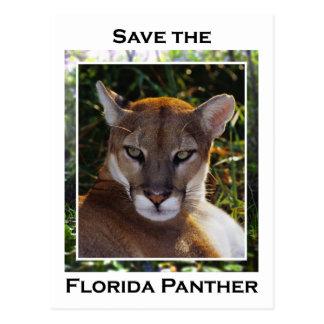 Florida Panther Postcard