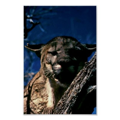 florida panthers animal. Florida Panther. Animal Park
