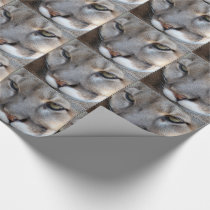 Florida Panther Wrapping Paper (4071) (border)