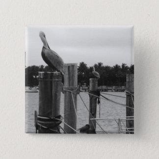 Florida, Pelican on Boat Dock photo pin